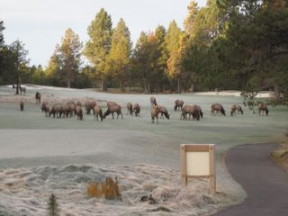 Elk view from Bedroom Nov 09