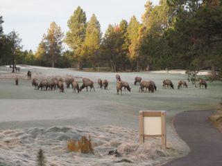 Elk view from Bedroom Nov 09